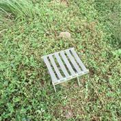 散养山羊小凳子